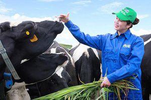 Vinamilk và GTNfoods đăng ký mua hơn 39 triệu cổ phiếu Mộc Châu Milk