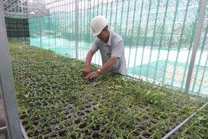 Phát triển nông nghiệp đô thị khu vực ven đô