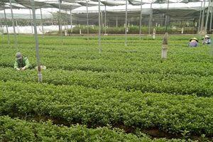 Phát triển chuỗi nông sản an toàn