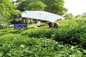 Năm 2021, diện tích cây lâu năm của Hà Nội đạt khoảng 24.850ha