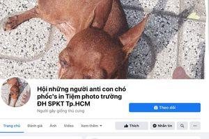 Chuyện thật như đùa: Đến đàn gà, con chó cũng bị lập trang anti trên mạng xã hội