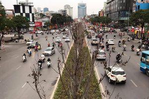 Qua ba mùa rét, hàng phong trồng tại Hà Nội vẫn chưa đỏ lá