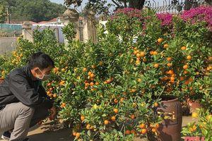 Thị trường hoa, cây cảnh chơi Tết bắt đầu sôi động