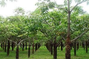 Có được chuyển đất trồng cây lâu năm sang đất nông nghiệp khác?