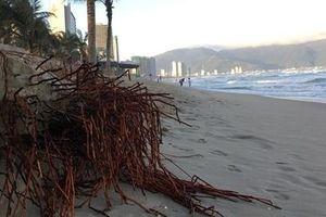Đà Nẵng tìm giải pháp khắc phục sạt lở dọc bờ biển
