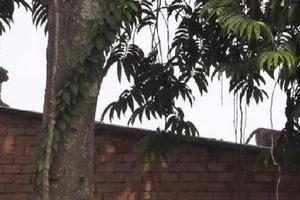 Vây bắt đàn khỉ 'đại náo' khu dân cư ở TP.HCM