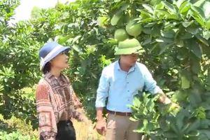 Ứng dụng, chuyển giao KHCN phát triển kinh tế nông thôn, miền núi