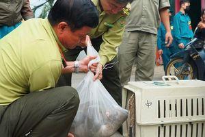 Bắt 2 con khỉ quậy phá khu dân cư ở TP.HCM
