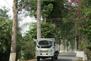 'Hàng cây Sáu Đấu' sừng sững một biểu tượng