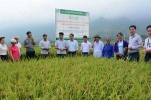 Nông nghiệp Yên Bái một năm vượt khó