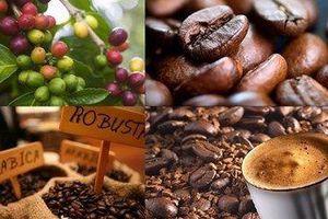 Giá cà phê hôm nay 15/1: Thị trường robusta lại 'đỏ lửa'; Giá hồ tiêu xuống thấp, doanh nghiệp tìm đường hướng nội