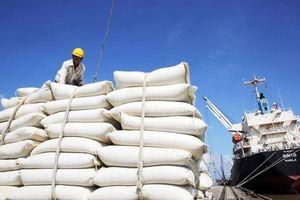 Xuất khẩu ngày 12-15/1: Thêm nhiều sản phẩm sữa Việt sang Trung Quốc; Gạo Việt đắt như tôm tươi; lý do mua gạo Ấn Độ