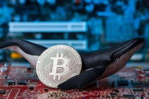 Bitcoin đảo chiều, cuộc chơi của những 'cá voi', 'cá mập'?