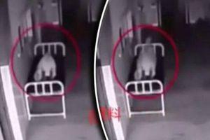 Kinh hãi đoạn video khi lại cảnh đáng sợ trong bệnh viện, các nhà khoa học chưa tìm được câu trả lời