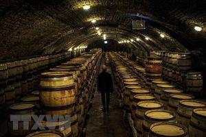 Các nhà sản xuất rượu vang Pháp có thể nhận hỗ trợ 200.000 euro/tháng