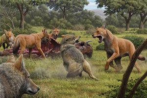 Phát hiện mới về loài sói cổ đại trong 'Game of Thrones'