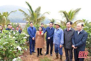Chủ tịch UBND tỉnh Đỗ Minh Tuấn khảo sát Khu di tích Chiến khu Ngọc Trạo và một số mô hình trồng cây ăn quả trên địa bàn huyện Thạch Thành