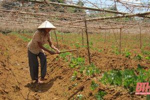 Chuyển đổi cơ cấu cây trồng theo hướng nâng cao giá trị kinh tế