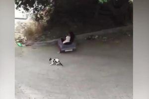 Mèo choáng váng vì tay lái lụa của cô chủ