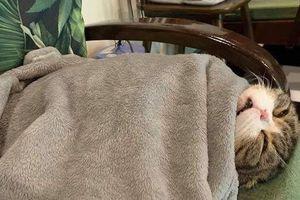 Tin được không: Bữa trước mẹ bảo mua mèo về nhà bắt chuột, bữa sau trở thành con cưng đến ngủ mẹ cũng lo cho từng tấm chăn!