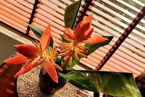 Những loại hoa rừng được người dân Hà thành 'ưu ái' chơi Tết