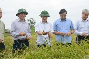 Nông nghiệp Nam Định phát triển toàn diện