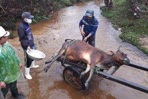 Kiểm tra về việc hơn 900 gia súc chết rét