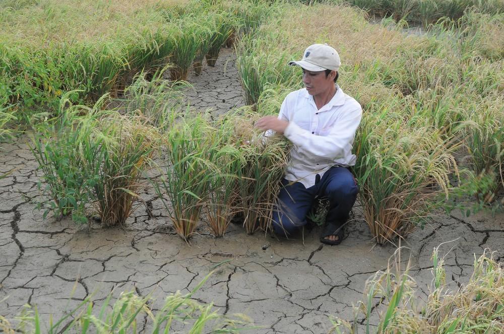 Thủ tướng hỏa tốc chỉ đạo theo dõi dòng chảy sông Mekong và xâm nhập mặn ở ĐBSCL