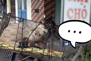 Xót xa hình ảnh chó mẹ cho đàn con bú trước khi bị đưa vào lò mổ