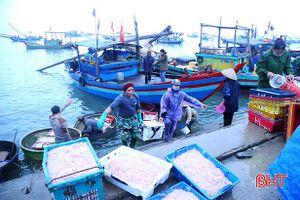 Ra khơi mùa biển động, ngư dân Hà Tĩnh 'trúng đậm' nhiều loại hải sản