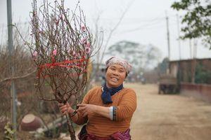 Tiểu thương vào tận vườn trả giá cao, nhiều người dân làng Nhật Tân 'hốt bạc' khi có đào bán trước Tết