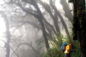 Chinh phục Fansipan trong sương mù
