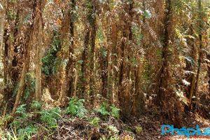 Cà Mau tăng cường công tác quản lý bảo vệ rừng trong dịp Tết Nguyên đán