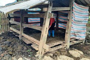 Nhiều hộ chăn nuôi gia súc còn chủ quan trong phòng, chống rét