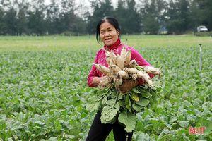 Hà Tĩnh phủ kín diện tích hơn 10 ngàn ha cây trồng vụ đông