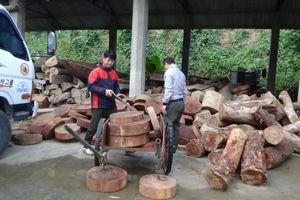 Bỏ lại 131 thớt nghiến, 'lâm tặc' bỏ trốn lên rừng tại Tuyên Quang