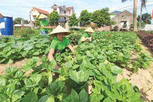 Bắc Ninh: Biến rác thành... 'tài nguyên'