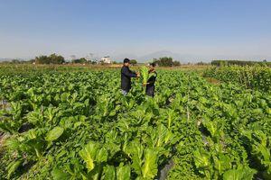 Đầm Hà nâng chất các tiêu chí xây dựng nông thôn mới