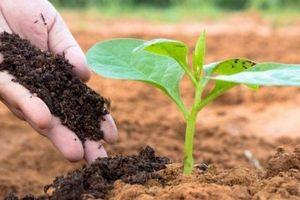 Giải pháp quản lý cây trồng tổng hợp