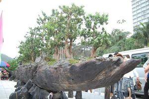 Chiêm ngưỡng dàn cây cảnh hơn 150 tỷ đồng của đại gia Thịnh 'đồng nát'