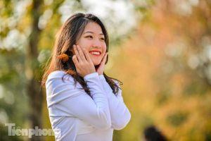 Thiếu nữ Hà thành khoe sắc bên hàng phong lá đỏ đẹp như xứ Hàn