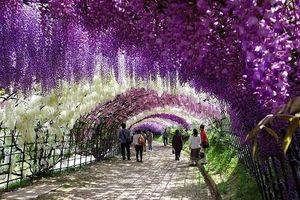 Những vườn hoa đẹp tuyệt vời 'hút' khách du lịch