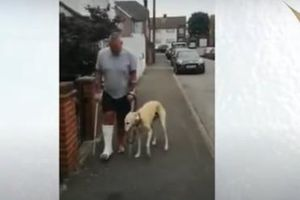Chi hơn 10 triệu đồng đưa chó đi khám nhưng chuyện đằng sau mới khiến chủ nó 'ngỡ ngàng'
