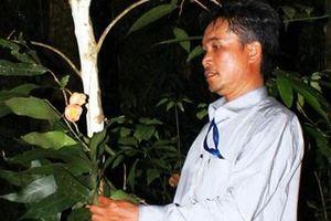 Phát hiện loài hoa Trà mi đặc hữu cực hiếm ở Vườn Quốc gia Bidoup-Núi Bà
