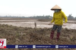 Nông dân Quảng Trị trước khó khăn kép của vụ Đông Xuân