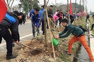 Hà Nội dự kiến trồng mới 408.804 cây xanh dịp đầu năm mới Tân Sửu