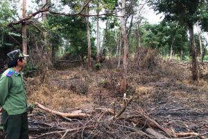 'Hút máu' của rừng