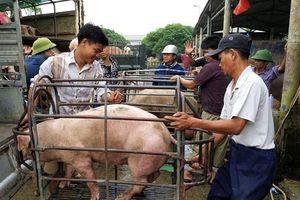 Giá lợn hơi hôm nay 21/1: 2 miền Bắc - Nam tiếp tục tăng