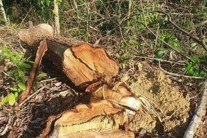Bắt 2 lãnh đạo Ban Quản lý vì bán rừng phòng hộ