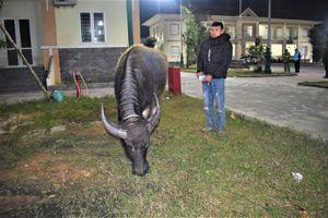 Quảng Bình: Bắt giữ đối tượng trộm cả 'cơ nghiệp' của người nông dân